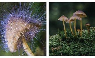 Лучшие трофеи с грибной фотоохоты (29фото)