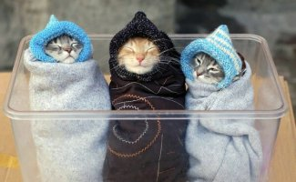 Как правильно пеленать котиков (31фото)