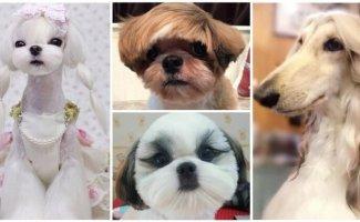 30 собак после стрижки: пост в котором мимимишность просто зашкаливает (31фото)