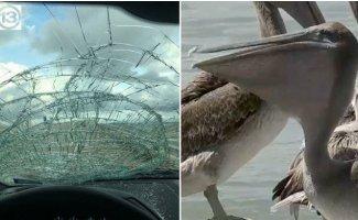 16 фотографий, после просмотра которых вы больше не захотите садиться за руль (21фото)