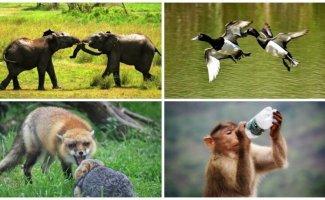 25 удивительных снимков животных в движении (26фото)