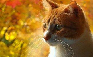 Кошки и осень (47фото)