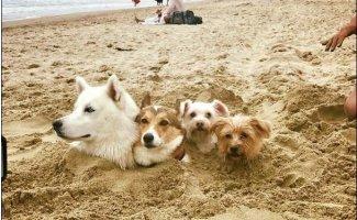 Тем временем на пляже (26фото)