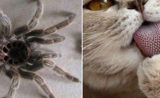15 фотографий, который вызовут самый нерациональный страх в мире (16фото)