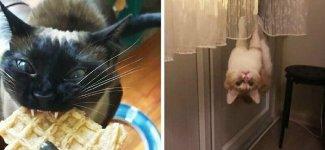 15 случаев, когда в котах сломались настройки, и они повели себя странно, но смешно (15фото)