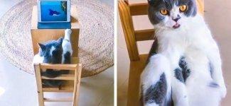 Странные кошки (26фото)