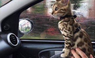 Коты (20фото)